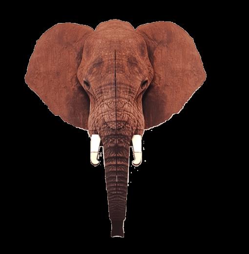פילים מעץ לתלייה על קיר